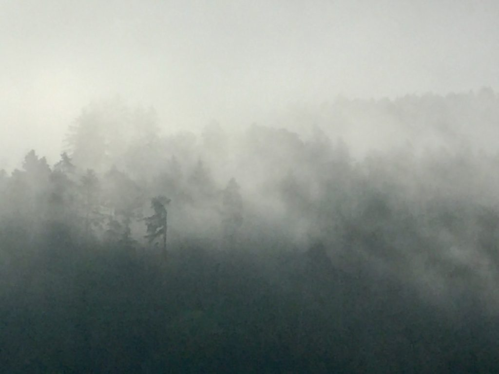 Nebel überm schwarzen Wald